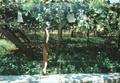 ag201008yamanashi03.jpg