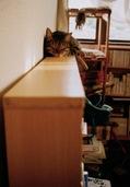 日めくり猫ら201012AGAT_18k