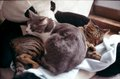 日めくり猫ら201012PETRI_FT2