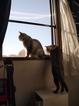 日めくり猫ら201012E-520
