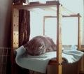 日めくり猫ら201012izone_550