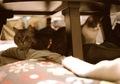日めくり猫ら201012klasse_s