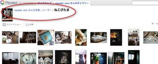 Picasaウェブアルバムで『日めくり猫らアルバム』始めました。3