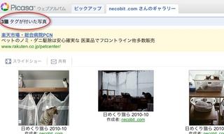 Picasaウェブアルバムで『日めくり猫らアルバム』始めました。5