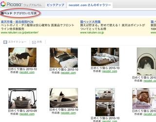 Picasaウェブアルバムで『日めくり猫らアルバム』始めました。6