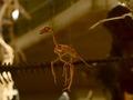 科学博物館恐竜2