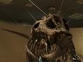 科学博物館恐竜4