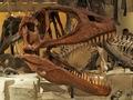 科学博物館恐竜5
