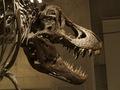 科学博物館恐竜6