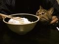 AGFA 830s necobitter『日めくり猫ら』まとめ 2011年1月分2