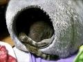 AGFA 830s necobitter『日めくり猫ら』まとめ 2011年1月分3