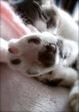 AGFA 830s necobitter『日めくり猫ら』まとめ 2011年1月分6