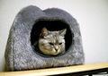 AGFA 830s necobitter『日めくり猫ら』まとめ 2011年1月分7