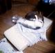 diana mini necobitter『日めくり猫ら』まとめ 2011年1月分