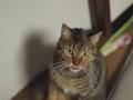 E-520 necobitter『日めくり猫ら』まとめ 2011年1月分2