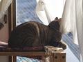 E-520 necobitter『日めくり猫ら』まとめ 2011年1月分6