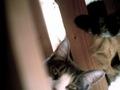 izone 550 necobitter『日めくり猫ら』まとめ 2011年1月分2