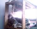izone 550 necobitter『日めくり猫ら』まとめ 2011年1月分3