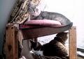 izone 550 necobitter『日めくり猫ら』まとめ 2011年1月分5