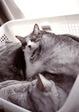 KLASSE S necobitter『日めくり猫ら』まとめ 2011年1月分1