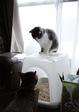KLASSE S necobitter『日めくり猫ら』まとめ 2011年1月分3