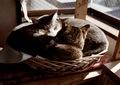 KLASSE S necobitter『日めくり猫ら』まとめ 2011年1月分4