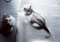 KLASSE S necobitter『日めくり猫ら』まとめ 2011年1月分6