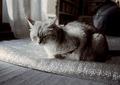 KLASSE S necobitter『日めくり猫ら』まとめ 2011年1月分7
