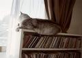 KLASSE S necobitter『日めくり猫ら』まとめ 2011年1月分9