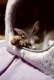 KLASSE S necobitter『日めくり猫ら』まとめ 2011年1月分10