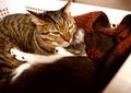 KLASSE S necobitter『日めくり猫ら』まとめ 2011年1月分11
