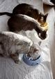 KLASSE S necobitter『日めくり猫ら』まとめ 2011年1月分12