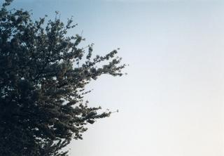 LOMO SMENA 8Mの使い方と写真作例5
