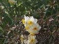 近づいて撮る花1