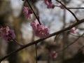 近づいて撮る花3