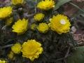 近づいて撮る花4