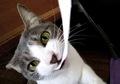 necobitter『日めくり猫ら』まとめ 2011年2月分agfa_830s1