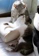 necobitter『日めくり猫ら』まとめ 2011年2月分agfa_830s2