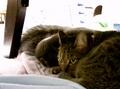 necobitter『日めくり猫ら』まとめ 2011年2月分agfa_830s3