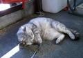 necobitter『日めくり猫ら』まとめ 2011年2月分agfa_830s5