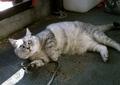necobitter『日めくり猫ら』まとめ 2011年2月分agfa_830s6