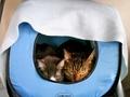 necobitter『日めくり猫ら』まとめ 2011年2月分agfa_830s9