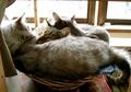 necobitter『日めくり猫ら』まとめ 2011年2月分agfa_830s10