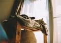 necobitter『日めくり猫ら』まとめ 2011年2月分belomo_agat_18k