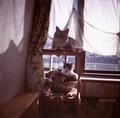 necobitter『日めくり猫ら』まとめ 2011年2月分dianamini1