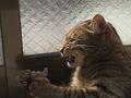 necobitter『日めくり猫ら』まとめ 2011年2月分e-5201