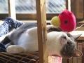 necobitter『日めくり猫ら』まとめ 2011年2月分e-5202
