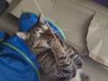 necobitter『日めくり猫ら』まとめ 2011年2月分e-5205