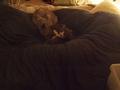 necobitter『日めくり猫ら』まとめ 2011年2月分e-5206
