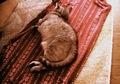 necobitter『日めくり猫ら』まとめ 2011年2月分izone5501